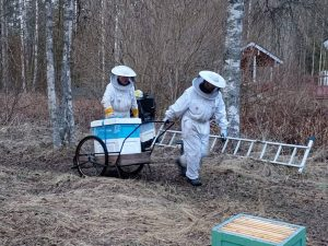 honeyfarm, bee, bees, honey production